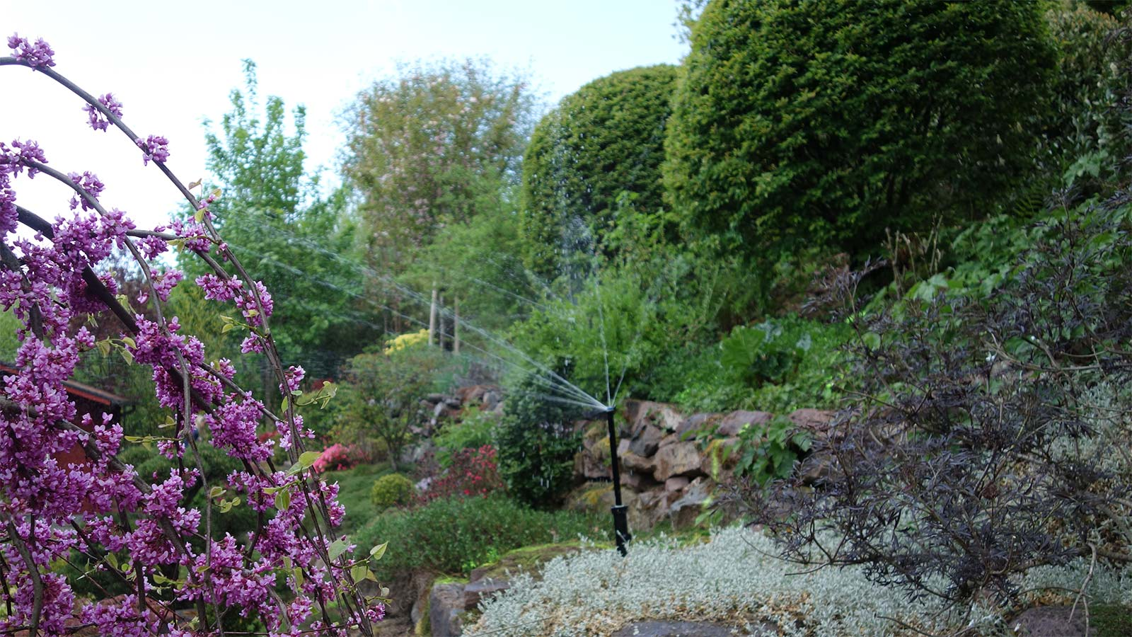 Bewässerung Pflanzen