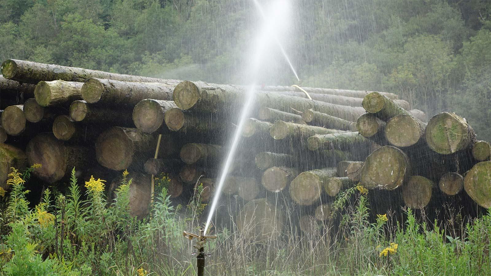 Baumstämme Bewässerungssystem